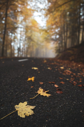 Autumn leaves fallen on land in forest