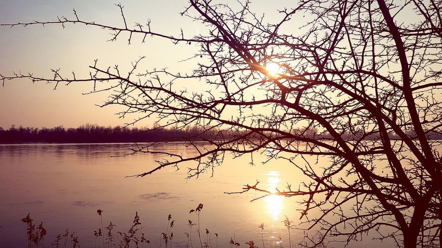 River Riverview Beauty In Nature Spring Is Coming  Tree Sunset Water Spread Wings Silhouette Tranquility Non-urban Scene Calm