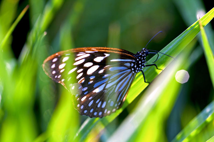 Close-Up Of Butterfly On Grass Blade