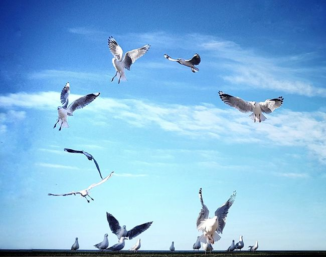 Bird Flying Spread Wings Flock Of Birds The Great Outdoors - 2017 EyeEm Awards EyeEmNewHere Sky Outdoors Seagull Seagulls Birds Letter O Ring Circle Circling Formation Pattern Summer Outdoors Photograpghy