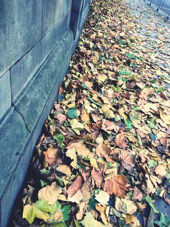 Autumn Autumn Colors Taking Photos Liverpool