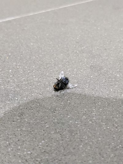 High angle view of fly on the road