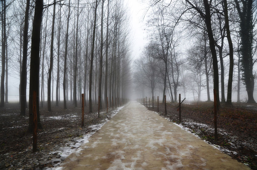 Street with trees in winter in Ticino, Switzerland Alley Beauty In Nature Branch Cold Temperature Color Day Diminishing Perspective Foggy Morning Forest In A Row Landscape Nature No People Outdoors Scenics Sky Snow Spooky The Way Forward Tranquil Scene Tranquility Tree Vanishing Point Walkway Winter