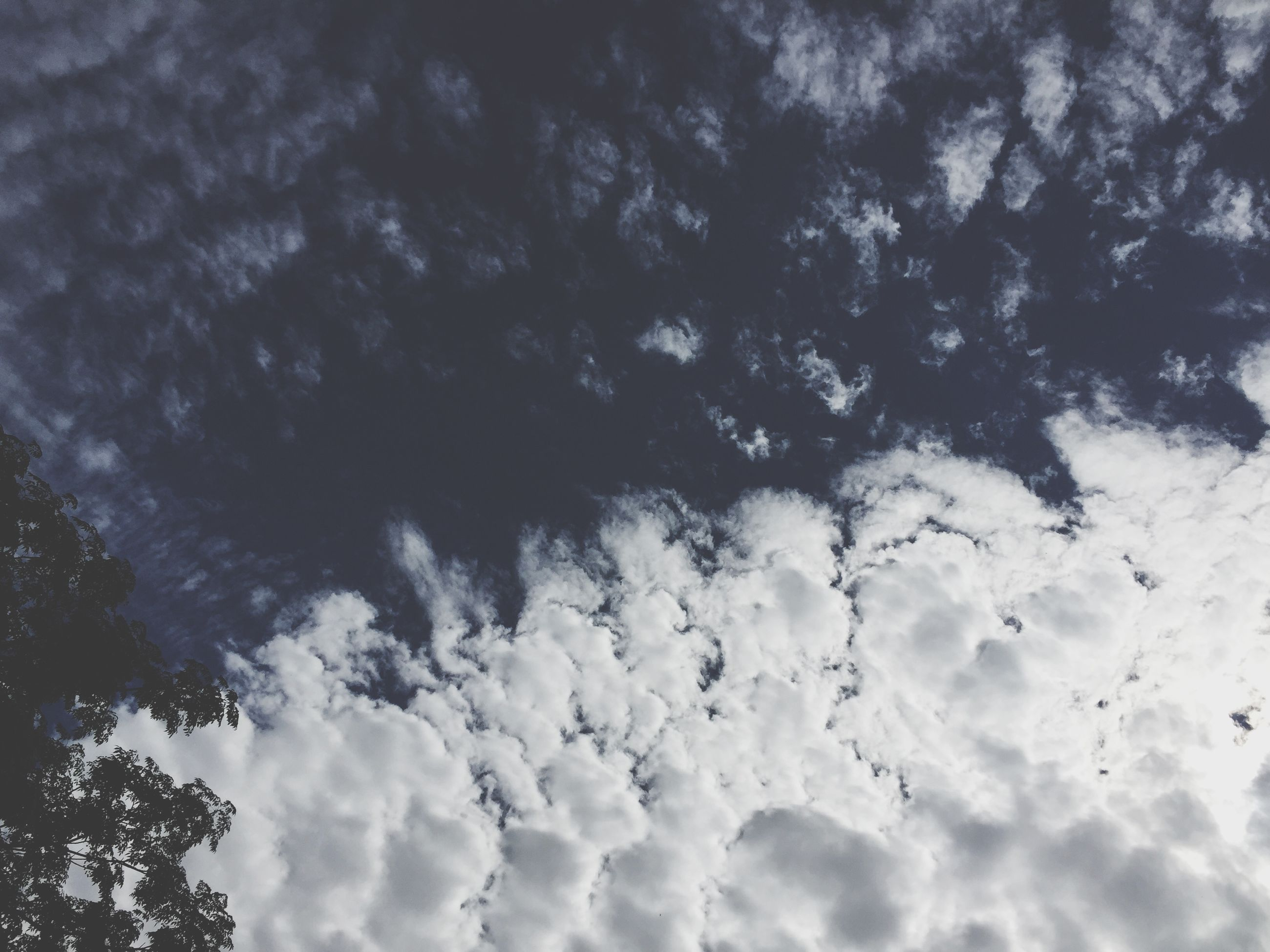 low angle view, sky, cloud - sky, beauty in nature, nature, backgrounds, cloudy, full frame, tranquility, sky only, scenics, cloud, white color, outdoors, tranquil scene, day, no people, cloudscape, tree, blue