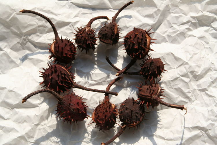 High angle view of chestnuts on paper