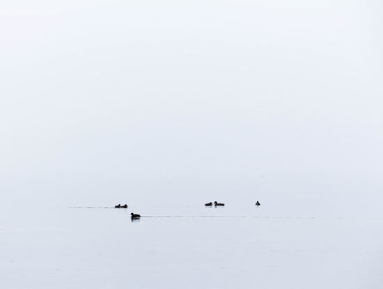 Animal Cold Temperature Lake Nature Water Animal Wildlife Winter Bird Outdoors Snow Landscape No People Sky Astrology Sign Day Foggy Morning Foggy Landscape Balticsea Foggy Day Foggyweather Fog Over Water Beauty In Nature Sea Nature Foggy Weather
