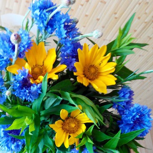 Beauty VSCO Vscoflower Flowers Photo Ukraine yellow blue beauty