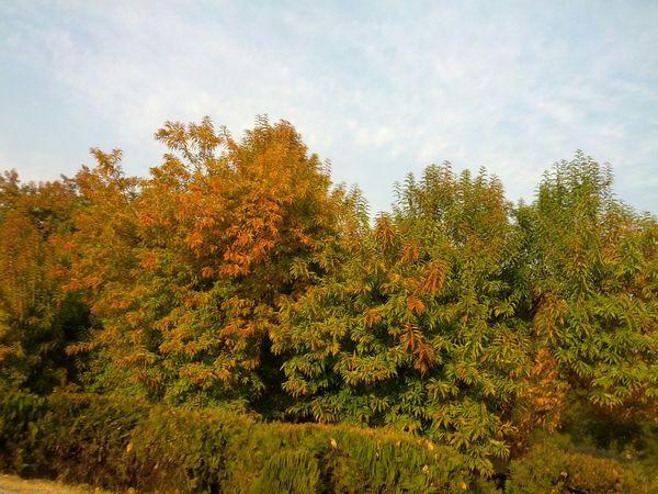Tree Love Colors Of Autumn IslamabadTheBeautiful Beauty Of Pakistan