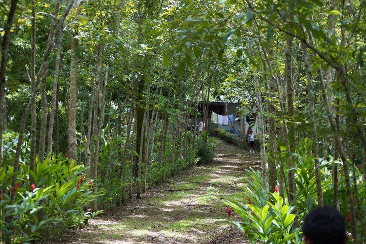 Arboles Sendero Bosques Tapijulapa, Tabasco Jardin De Dios