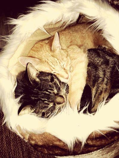 Domestic Cat Hugs & Love  EyeEm Diversity The Secret Spaces Pet Portraits JingJang Portrait Of Cats Honor9