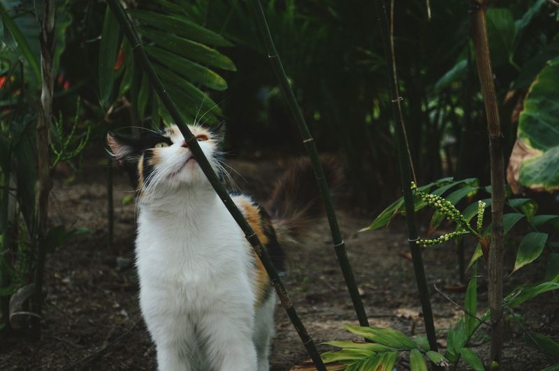 Cat Looking Up In Yard