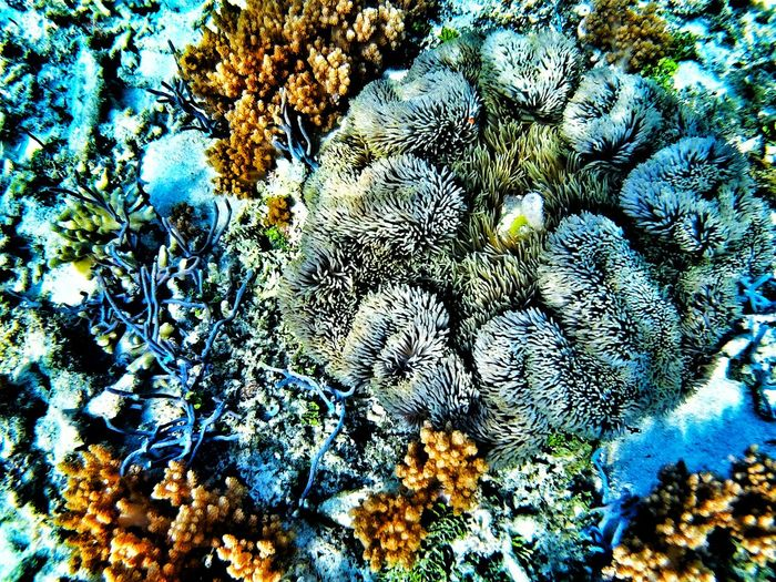 one of the Coralreef are still alive Indonesianbeauty Banyuwaparadise. Beautyindonesia Save The World Savecoral Saveourplanet Saveourearth Loveindonesia Banyuwangi First Eyeem Photo