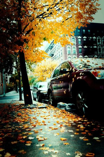 When fall