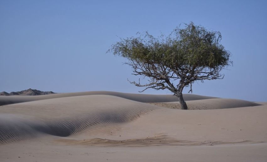 Sand Desert Tree Nature No People Landscape Outdoors Sky Oman Travel Simplicity Tree One Day Clear Sky