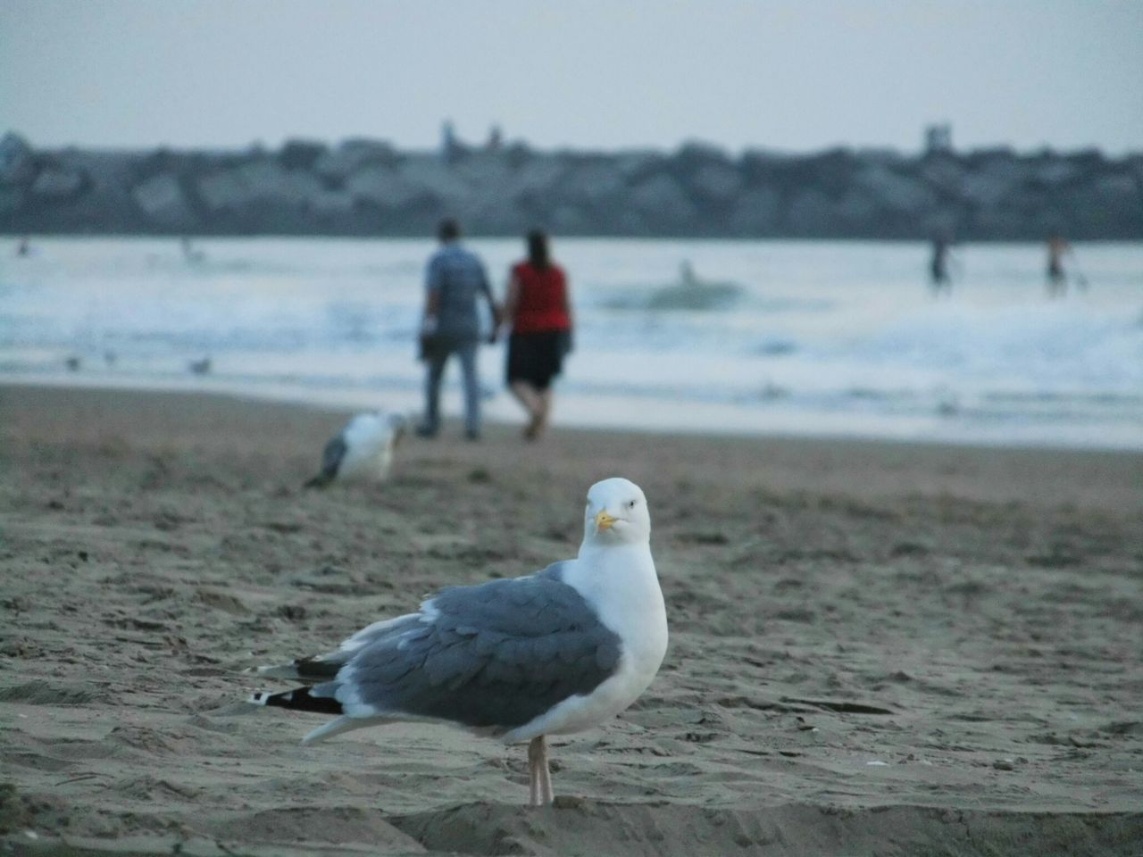 bird, beach, one animal, sea, animals in the wild, nature, focus on foreground, water, sand, seagull, real people, animal wildlife, outdoors, day, two people, beauty in nature, men, sea bird, perching, full length, sky, people