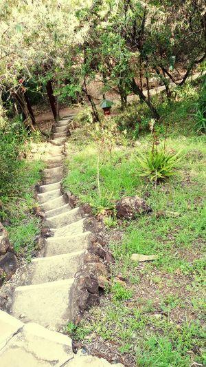 Narrow Footpath Steps
