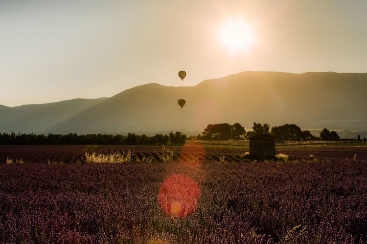 Hot air ballooning at sunrise Hot Air Balloons Sunrise Over Mountains Agriculture Beauty In Nature Field Flower Growth Hot Air Ballooning Land Landscape Lens Flare Mountain Nature No People Outdoors Plant Purple Rural Scene Scenics - Nature Sun Sunlight Tranquil Scene Tranquility
