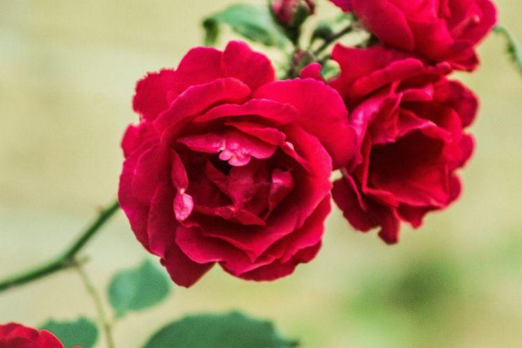 Flower Flowering Plant Beauty In Nature Plant Vulnerability  Fragility Freshness
