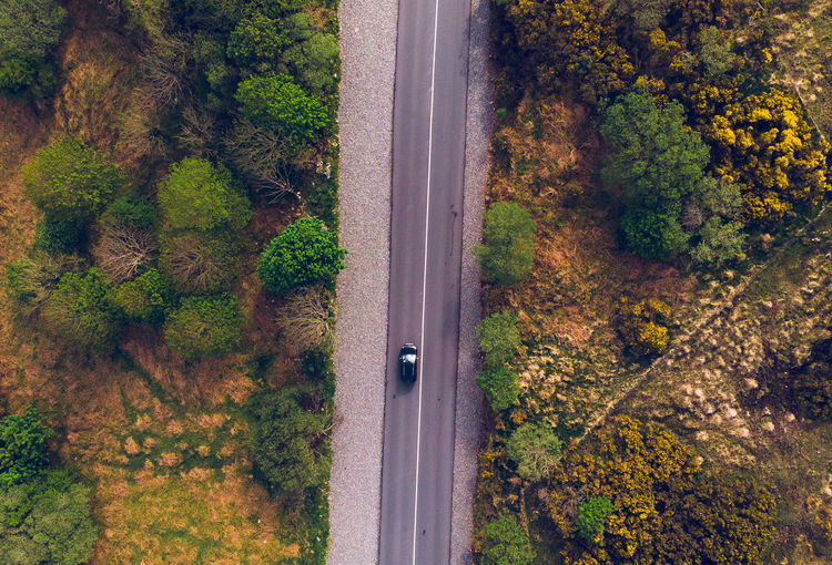 Vehicle on road amidst trees in forest