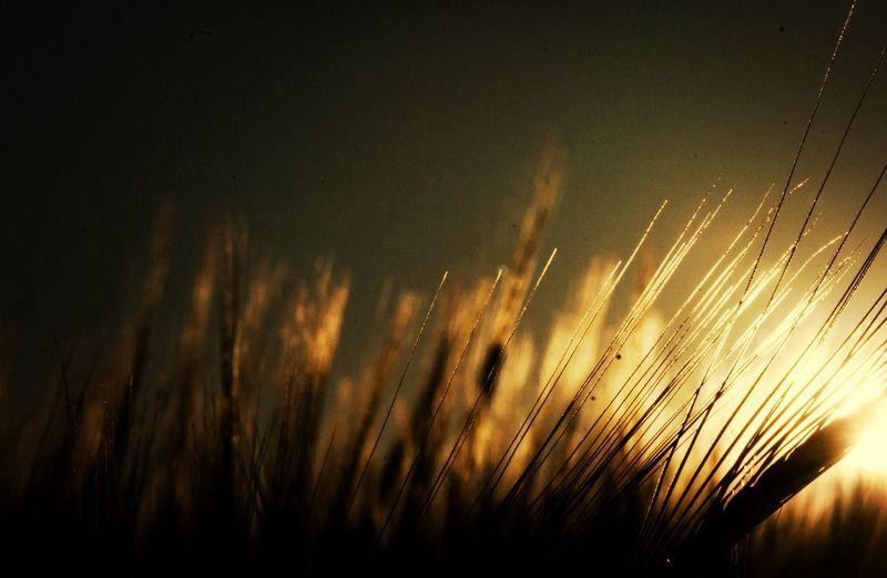 Sunset Nature Landscape Landscape_Collection