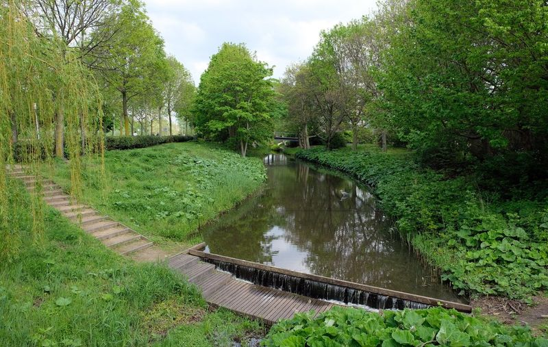 Attraction theme park the Efteling, Kaatsheuvel, the Netherlands Plant Water Tree Tranquility Nature Growth Green Color Tranquil Scene Beauty In Nature Reflection Scenics - Nature Grass Day Lake No People Sky Connection Non-urban Scene Land Outdoors Footbridge Floating On Water