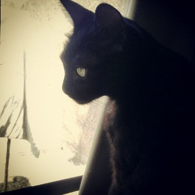 Cat BLackCat Myhairykid