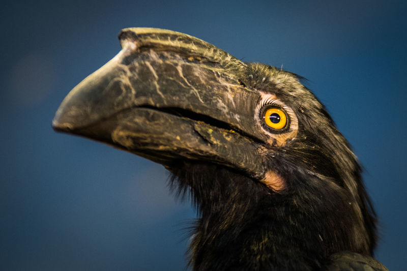 Close-up of hornbill against sky