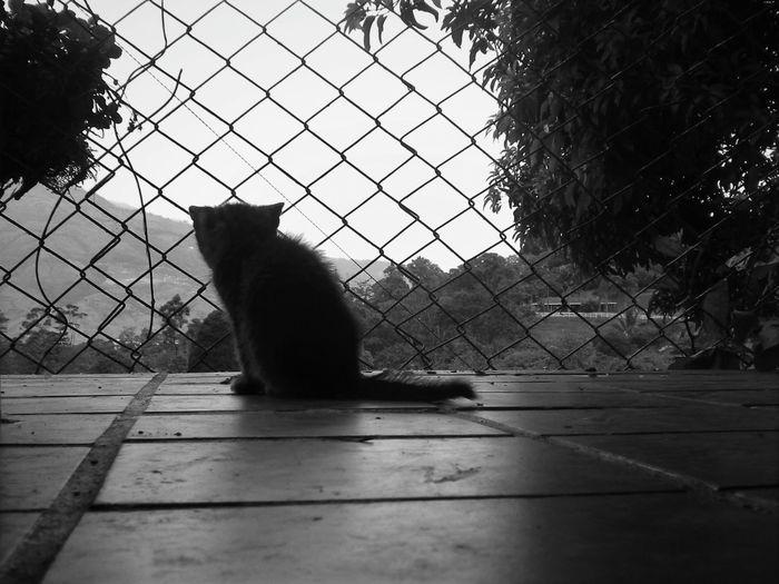 One Animal Animal Gato😽 Cat♡