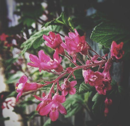 Flower Soft