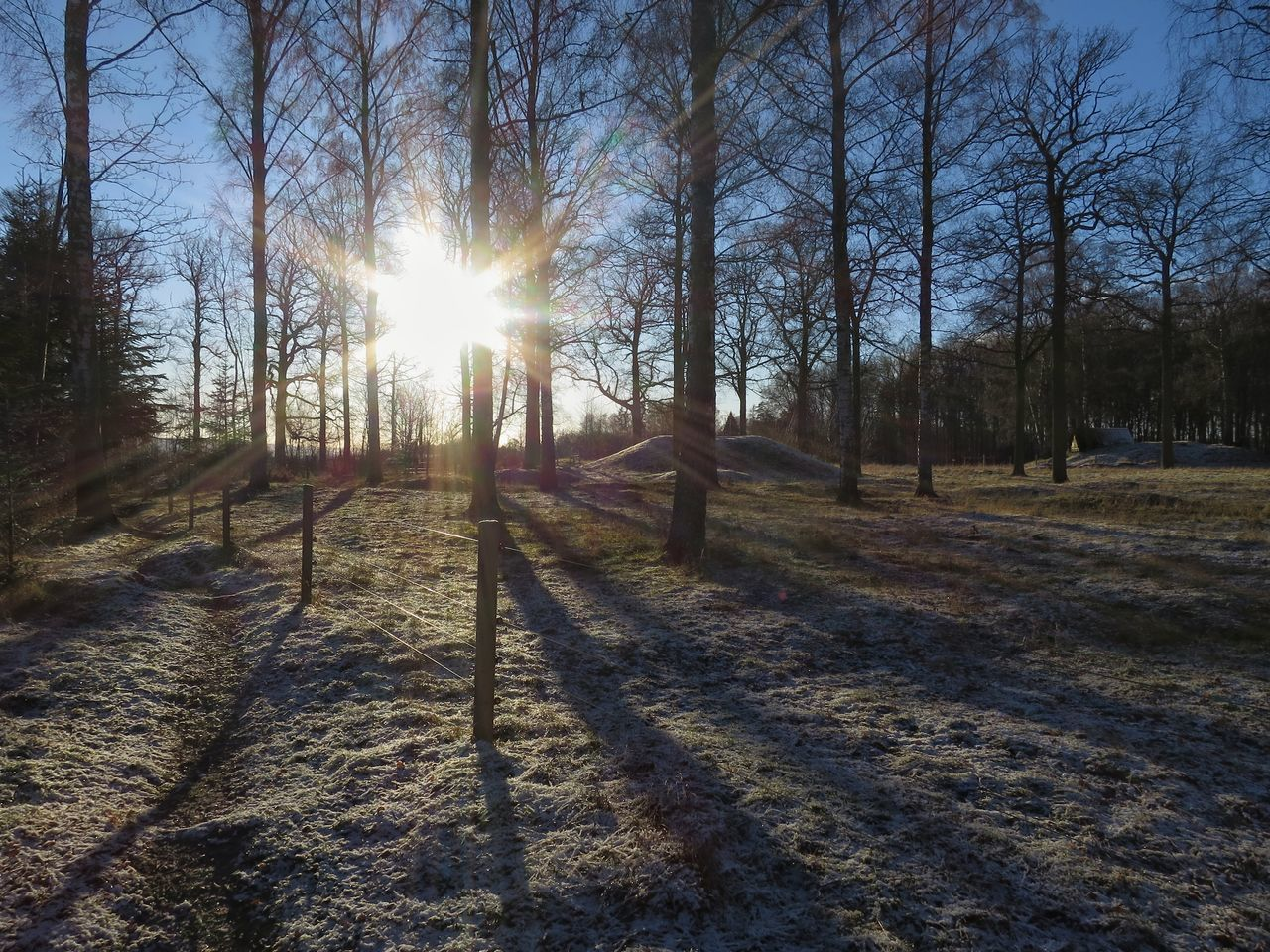 sunbeam, sunlight, tree, sun, lens flare, tranquility, nature, tranquil scene, bare tree, landscape, no people, day, outdoors, sunset, scenics, beauty in nature, winter, sky