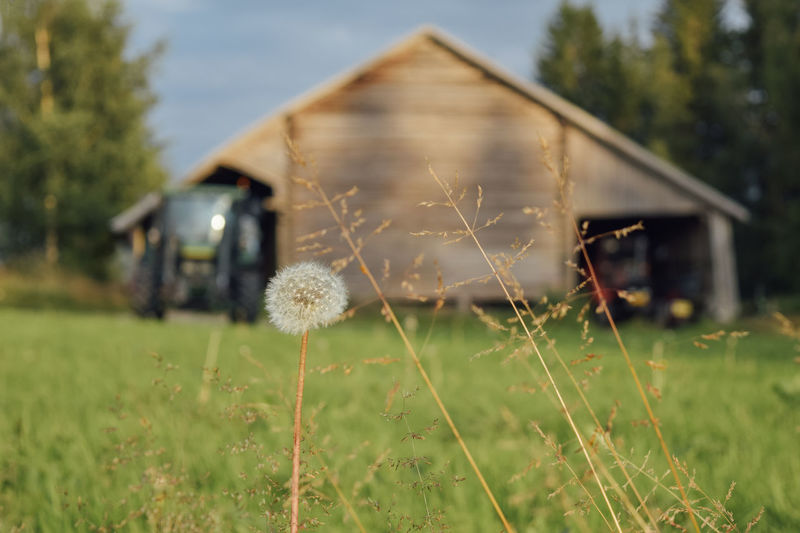 Grass on field by barn