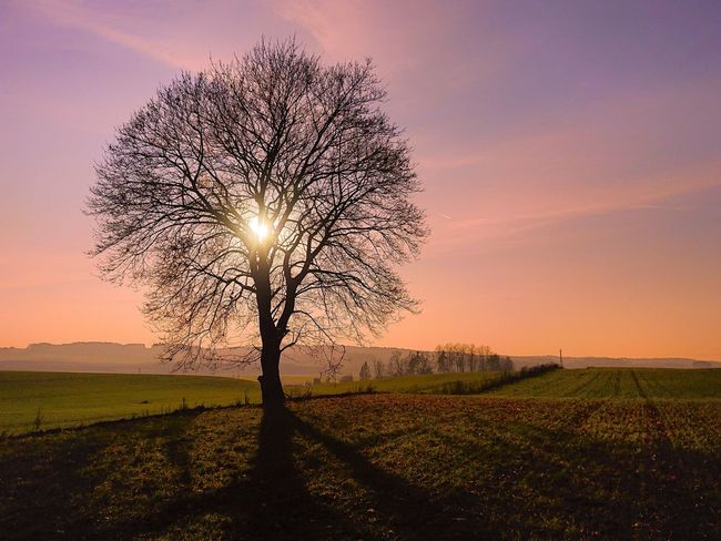 Beautiful sunset Lonely Lonely Tree Sunset Sunset Silhouettes Sunset Trees  Trees And Sky Polska Poland Nature Warmia Masuria Mazury Landscape Sunset Lovers Tree Sunset Rural Scene Agriculture Silhouette Sunlight Field Backgrounds Sky Landscape Single Tree Patchwork Landscape Blooming In Bloom EyeEmNewHere