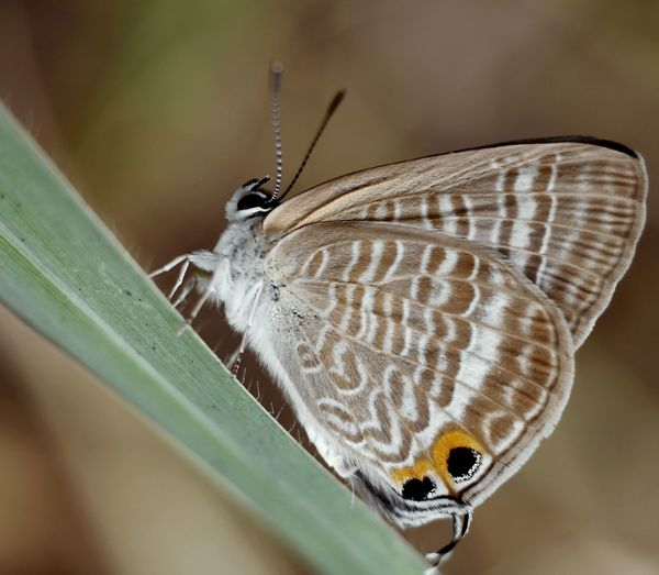 Butterfly Animal One Animal Animal Themes Butterfly - Insect Close-up Macro Nature Magnification Zoology Animal Antenna Outdoors