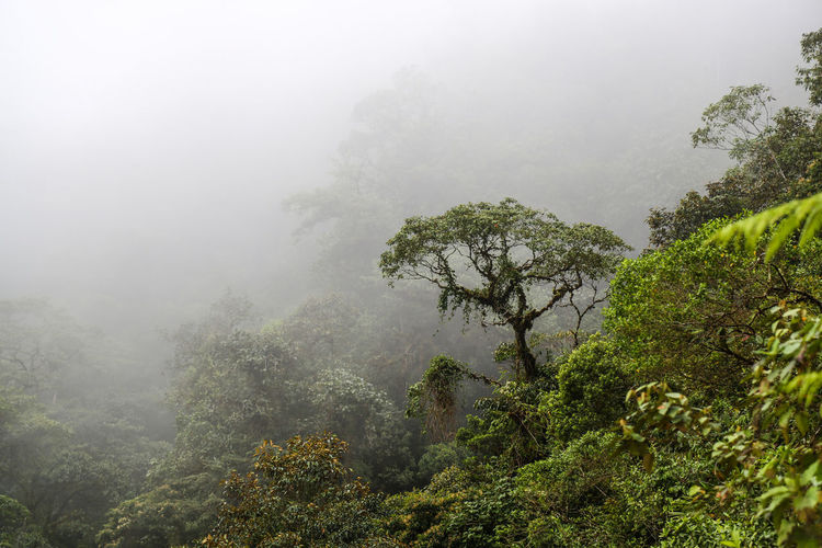 Beauty In Nature Day Ecuador Fog Foggy Foggy Day Forest Green Color Growth Hazy  Landscape Lush Foliage Mist Mountain Nature No People Outdoors Plant Rainforest Scenics Sky Tranquil Scene Tranquility Tree