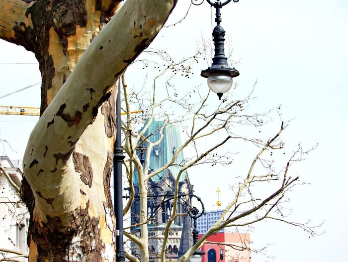 Tree Branch Low Angle View Built Structure Nature Architecture Building Exterior Lighting Equipment Street Outdoors Electric Lamp Kaiser Wilhelm Memorial Church Ku'damm