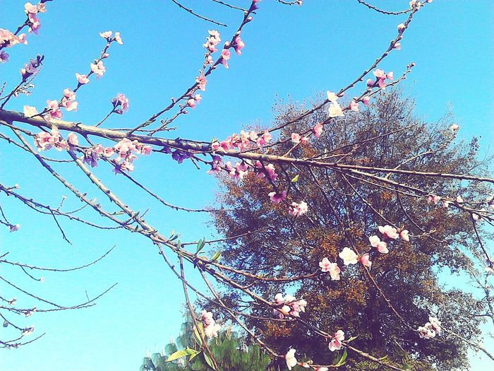 Flower Tree Fragility Beauty In Nature Sky Nature Day No People Freshness Guatemala Floreciendo!! 🌸🌱🌼🍁🍂