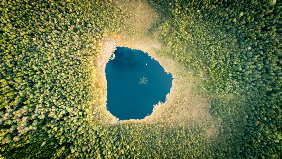 Forest Lake Lithuania Lietuva Aerial Sky Vertical Top Down View Travel Tourism Wild Green Blue Water Eco Ecology Flora Lake Vertical Minimal Minimalism Nature Forest Woods WoodLand Plant Green Color Aerial View Directly Below Drone  Growing Idyllic