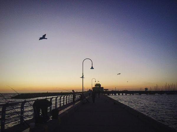 豪爽的雨聲是我對這片土地的思念,想起了那一個夜晚,為了迎接企鵝們的歸來而意外的享受了日落晚霞的光芒;而那無邊無際的海,則讓人心無旁騖的放空 Melbourne Beach Summer Stkilda Penguin Sunset Throwback Citylife Sea Australia