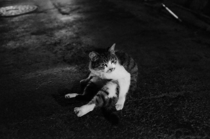 「Night cat.」 EyeEm Best Shots - Black + White Fuji X100s Cat Streetphotography