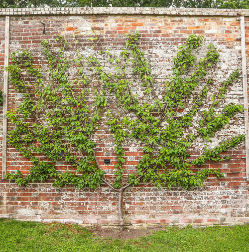 tree on brick wall Tree Brick Wall Brick Walll Brick Wall Background Garden Pixelated Communication Full Frame Grass Close-up Green Color EyeEmNewHere