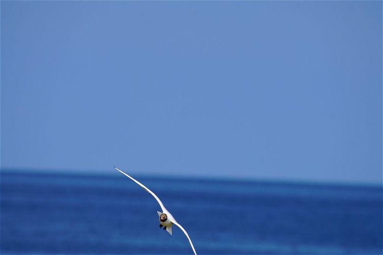 Black-headed gull flying over sea against clear sky