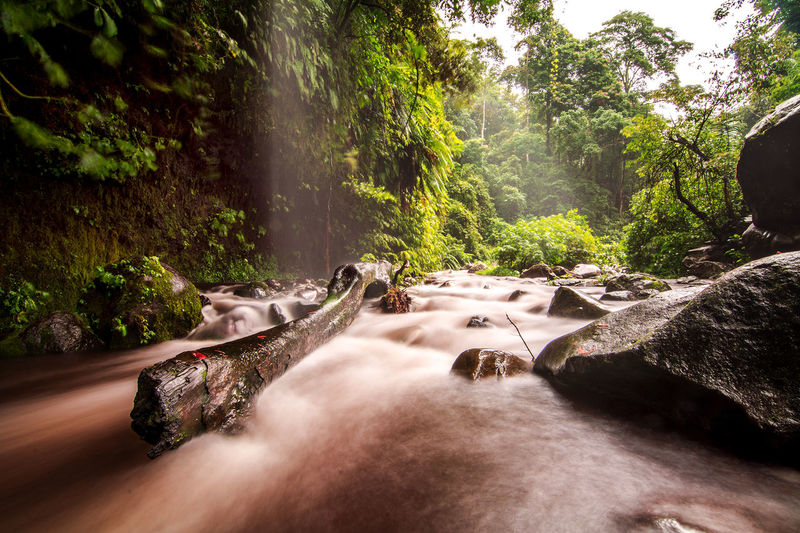 River stream through rocks in rainforest