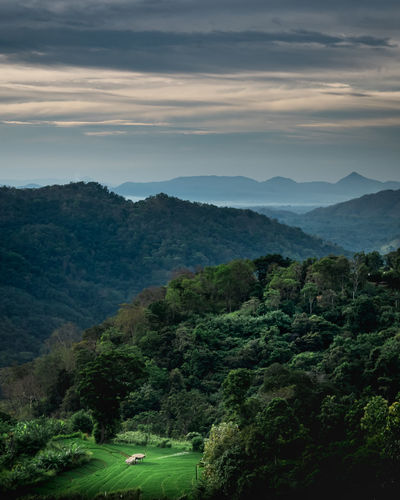 Sri lanka landscape, ella, sri lanka. mountain landscape in the morning with cloudy sky