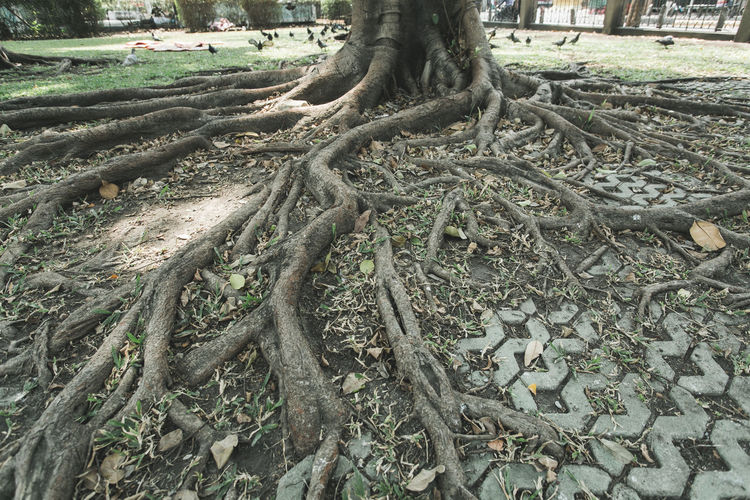 Trees in forest Beauty In Nature Big Tree Branch Close-up Forest Garden Gardens Leaf Leaf Green Color Plant Nature Leaves Nature Nature No People Outdoors Park Plant Root Roots Of Tree Shadows & Lights Tree Tree