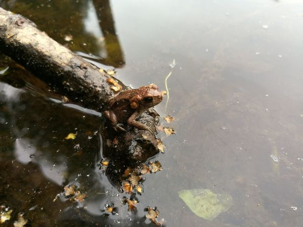 small frog Small Frog Frog Nofilter Noedit Manual Focus Purist No Edit No Filter Smartphone Photography HuaweiP9 Nature Just Now