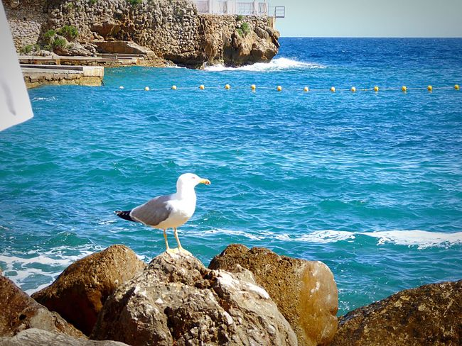 EyeEm Selects Rock - Object Sea Beach Nature Seagull Love Sea Bolonie Sommergefühle Summertime Seagulls And Sea Beauty In Nature LoveNature 🌼 Blue Sky Summer Rocky Coastline Ladyphotographerofthemonth Breathing Space
