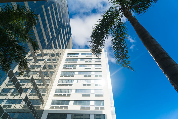 Tree Architecture Built Structure Low Angle View Palm Tree Skyscraper City Day Building Exterior Home Ownership Blue Sky Sunlight Outdoors No People Growth Apartment Nature Cityscape