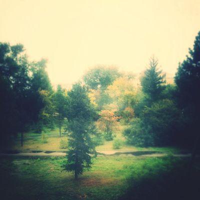Nature Omsk Природа осень