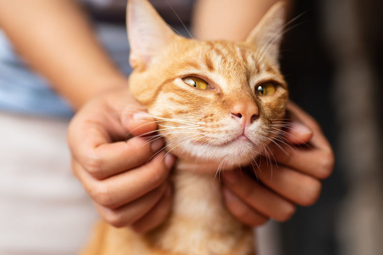 Playing wih ginger cat Body Part Care Cat Cat Face Close-up Cute Cats Domestic Domestic Animals Domestic Cat Feline Focus On Foreground Hand Holding Human Body Part Human Hand Kitten Mammal One Animal Pet Owner Pets Playful Whisker