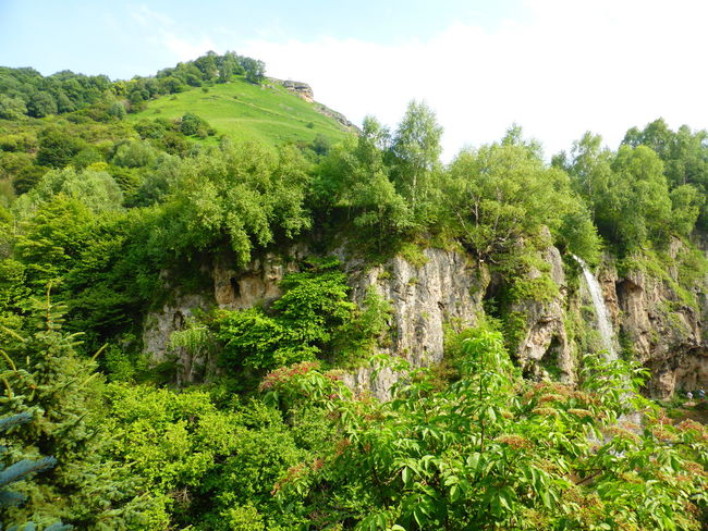 honey waterfall Flowing Water Green Color Green Color Plant Beauty In Nature Rock Rocky Tranquility Day Flowing Water Droplets Green Color Growth Nature Nature Outdoors Plant Rocky Mountains Tree Waterfall